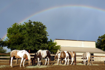 Rainbow @ barn with horses 2010